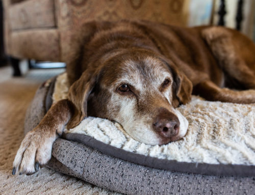 Care for Senior Pets