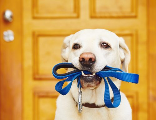 What Kind of Leash is Right For Your Dog?