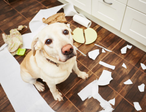 What To Do If Your Dog's Behavior Suddenly Changes