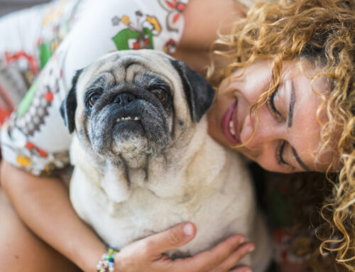 Keeping Your Pets Active: Exercising Your Senior Dogs