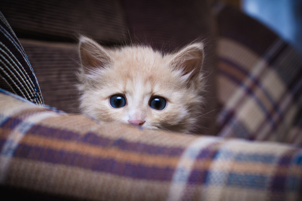 anxiety and ocd in cats
