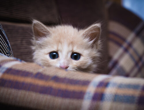 Signs of OCD and Anxiety in Cats