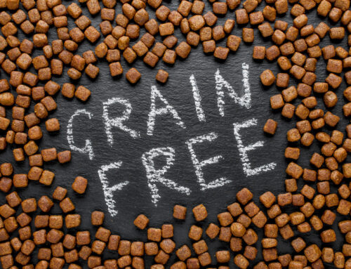 What's The Deal with Grain-Free Dog Food?