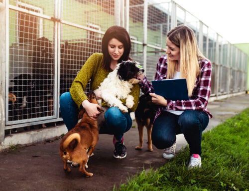 Tips for Evaluating a Dog Rescue