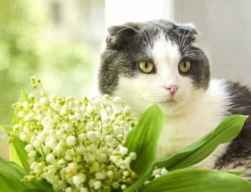 Which Plants are Poisonous to Family Pets?