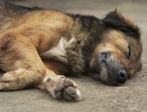 Save Your Pet's Life: Be Prepared to Respond to a Poisoning Emergency