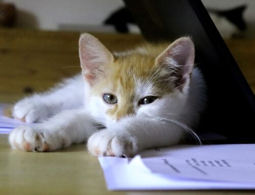 Help Your Cat Cope with Separation Anxiety when You Go Back to the Office