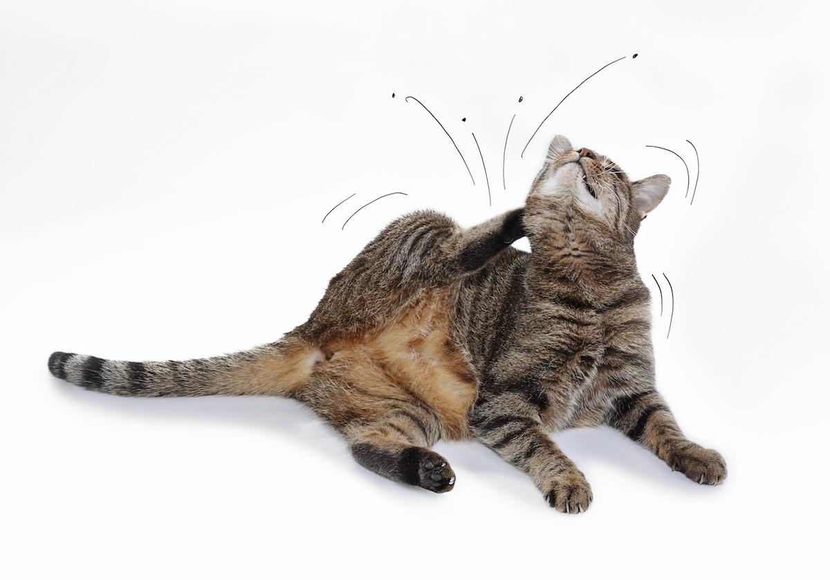summer flea and tick season