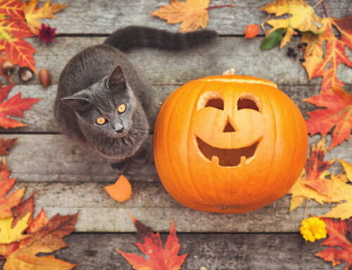 Can Cats Eat Pumpkins? And Other Food Questions for Felines
