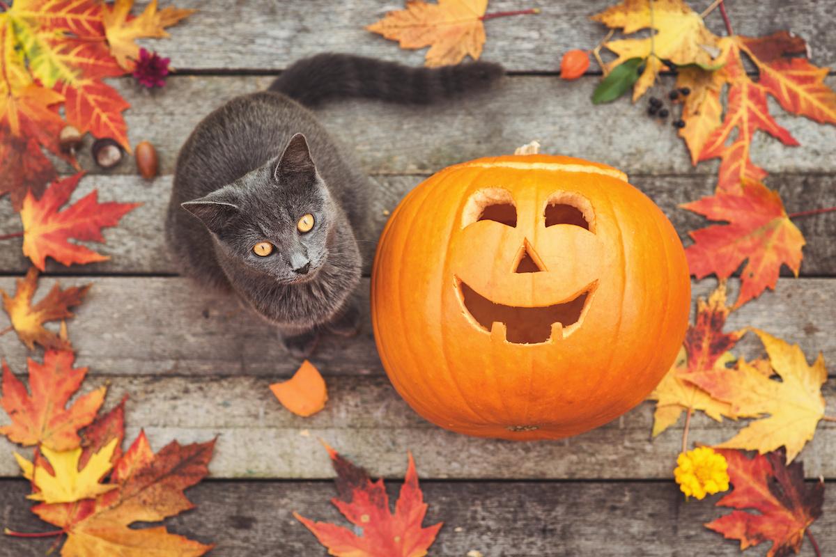 can cats eat pumpkins